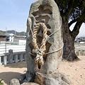 Photos: saigoku18-49