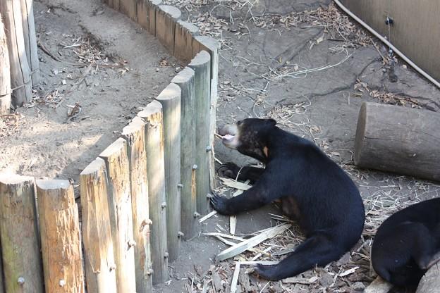 写真: 展示施設を豪快に破壊するマレーグマ