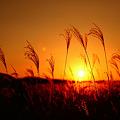 写真: 『秋風に黄昏て。。。』