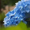 Photos: ブルーが好きです。