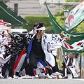 かつみ(鳴子会)_03 - 第8回 浦和よさこい2011