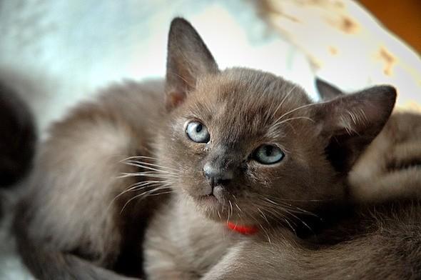 kitten1018_06