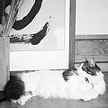 Photos: 玄関猫