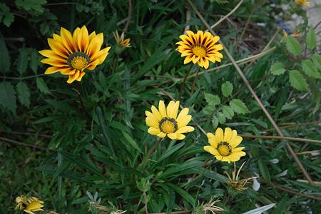 Flower07022011sd15-04