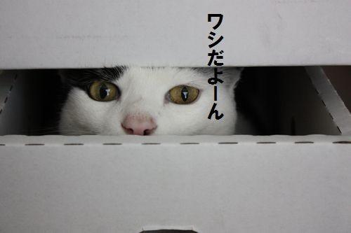 Photos: washi