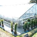 写真: 立派な温室