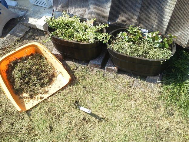 今日はプランターの株植えと草むしり。日焼け目的も兼ねて一石二鳥。にしても地味な作業だなφ (。。)