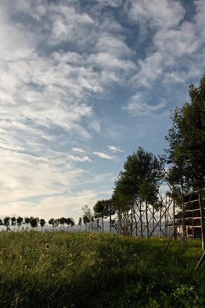 福島潟はさ木