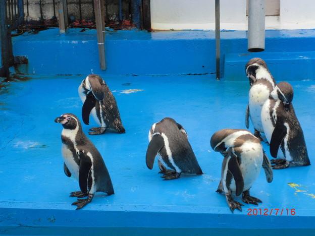 室蘭水族館(2012.7).25