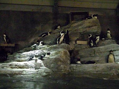 20100831 ペンギンプール03