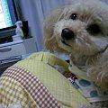 Photos: 犬 かわいい