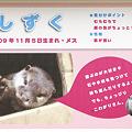 写真: hirakata110917044