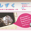 Photos: hirakata110917044