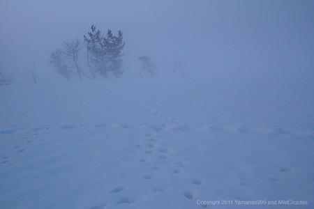 朝靄と痕跡
