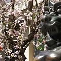 Photos: 稲毛神社の桜と狛犬4
