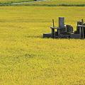 水田と墓地