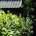 Photos: 20100606_083828
