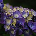 花は紫^^