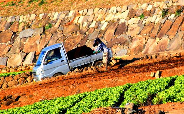 農作業に打ち込む青年