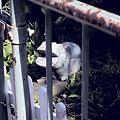 Photos: カバの柵