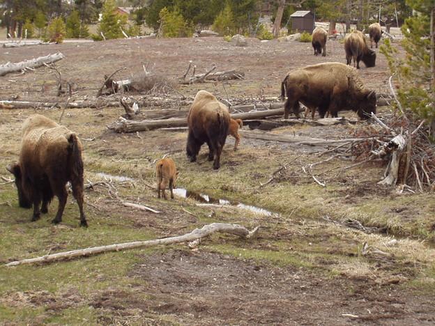 2003/05/11 国立公園「Yellowstone National Park」にて