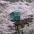 桜色の中を