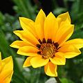 身近な愛の花