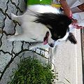 写真: おはようございます! 朝から母の犬ロビンの予防注射にきてます。 お...