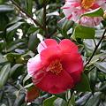 2011 04 桜