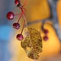 秋のなごり~