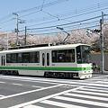 Photos: 荒川線8500形 8501