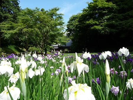 100615-明月院裏庭園-56