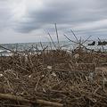 Photos: driftwood