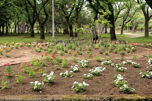 Photos: 合浦公園・花々03-12.07.04
