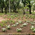 合浦公園・花々03-12.07.04