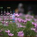 Photos: 2011年10月カレンダー