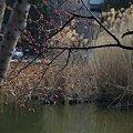 上野~小石川散歩7