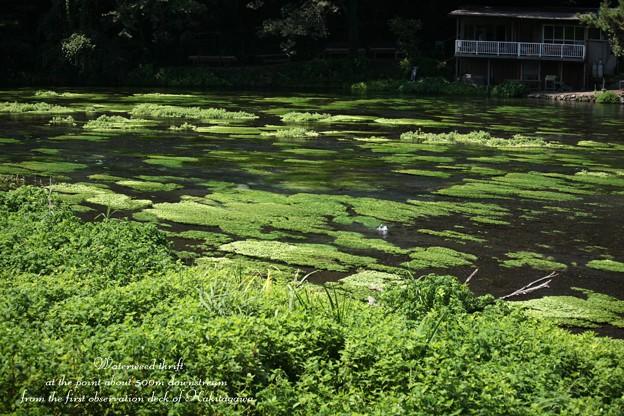 Photos: 柿田川中流域の景色3