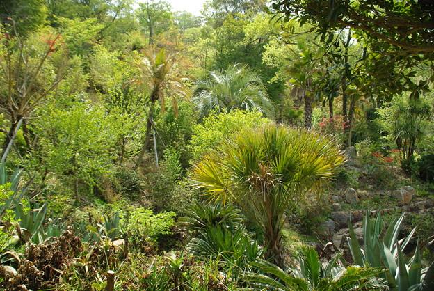 モネの庭/地中海の風景・光の庭