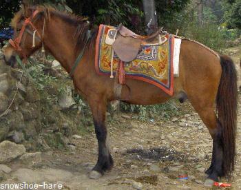 ネパールの馬