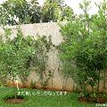 Photos: 裏庭の庭木