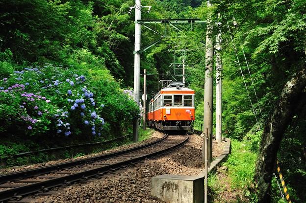紫陽花満開電車