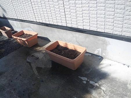 2012.05.19 ゴーヤの種を植えました