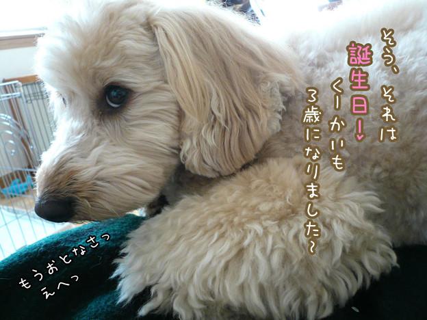 写真: くーかい 3歳の誕生日♪ 2