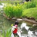 水辺で魚を捕る子供