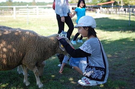 羊かわいい