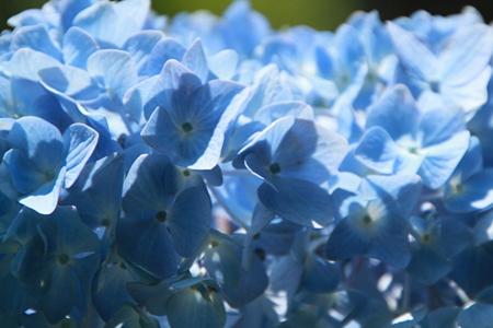 青の世界_1573