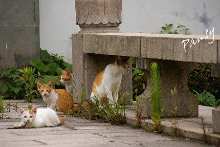 ママと・・仔猫たち・・1