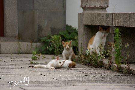 ママと・・仔猫たち・・2