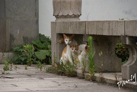 ママと・・仔猫たち・・3